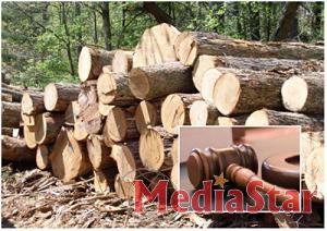 На додаткових аукціонних торгах лісопідприємства продали 56,5% виставленого обсягу необробленої деревини