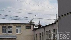Комунальні служби міста ліквідують самосіви на дахах будинків
