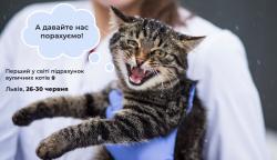У Львові проведуть перший в світі підрахунок вуличних котів: у ЛКП «Лев» розповіли, як долучитися