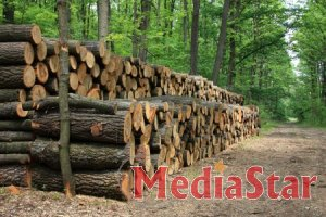 Підсумки роботи  по  лісозаготівлі   за 8 місяців 2019 року.
