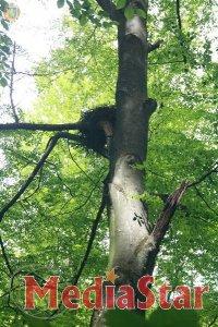 Сколівські лісівники на сторожі біорізноманіття