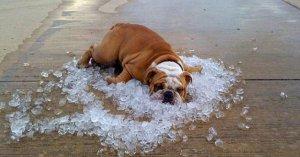 В Україні найближчими днями буде спекотно