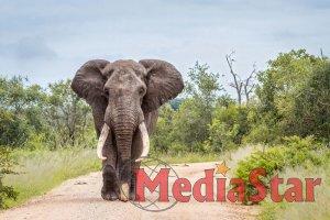 В Індії знайшли мертвими два десятки слонів