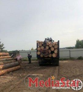 Незаконна порубка дерев у національному природньому парку на понад 350 тис грн – на Львівщині підозрюють організовану злочинну групу, в числі якої є службовці парку