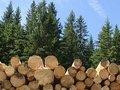 На Львівщині ліс крали цілою сім'єю